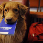 passaporto-canino