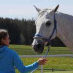 Stress Cavallo