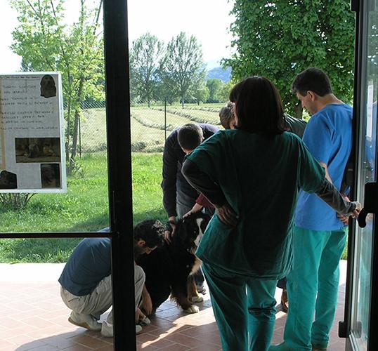 Animali domestici cure e pervenzione informasalute for Rivista di programmi domestici