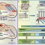 tumore polmone hmena